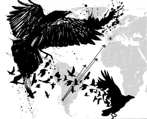 ptaki anarchii