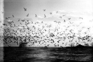 black-and-white-photography-vintage-Favim.com-417041_large